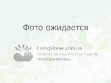 Crassula v. Silver SpringTime